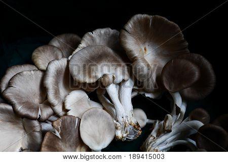 Fresh oyster mushroom on the basket .Healthy oyster mushroom.