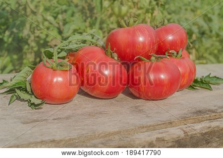 Fresh Ripe Tomatoes Cooked With Herbs