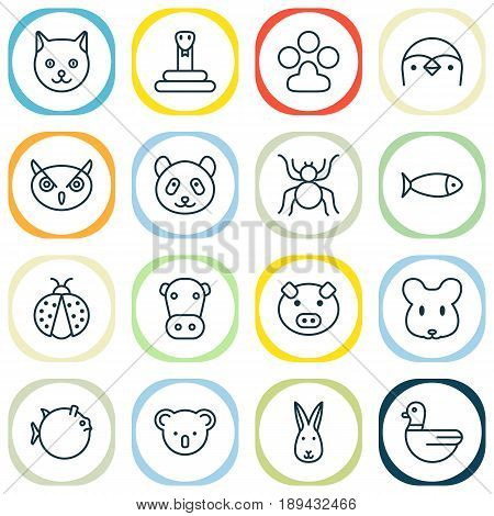 Zoology Icons Set. Collection Of Bear, Piglet, Kine And Other Elements. Also Includes Symbols Such As Insect, Marsupial, Diver.