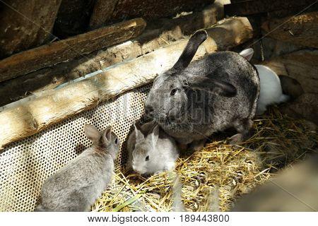 Cute rabbits on farm
