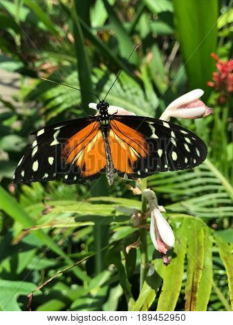 Butterfly, black and orange butterfly, orange butterfly, black butterfly