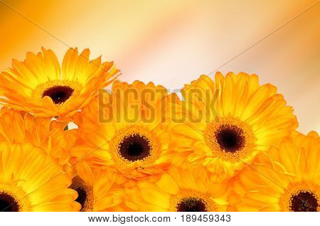 Photo of Gerber flowers on color background