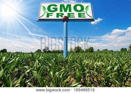 Billboard with text GMO Free (genetically modified organism) on a corn field with blue sky and sun rays