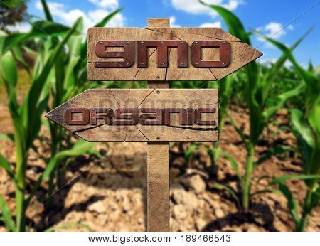Two wooden directional signs with text GMO (genetically modified organism and Organic on a corn field