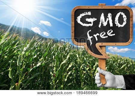 Hand holding a blackboard in the shape of a speech bubble with text GMO Free (genetically modified organism) on a corn field with blue sky and sun rays