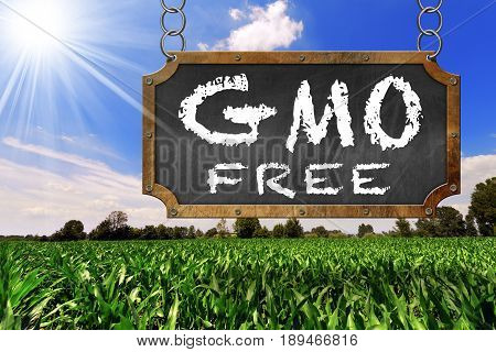 Sign with text GMO Free (genetically modified organism) on a corn field with blue sky and sun rays