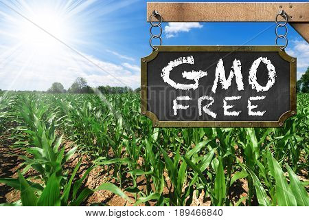 Wooden sign with text GMO Free (genetically modified organism) on a corn field with blue sky and sun rays poster