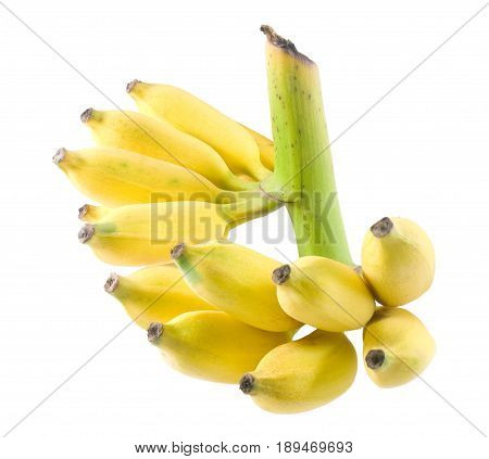 Fruits Bunch of Ripe and Sweet Wild Asian Bananas or Cultivated Banana Isolated on White Background.