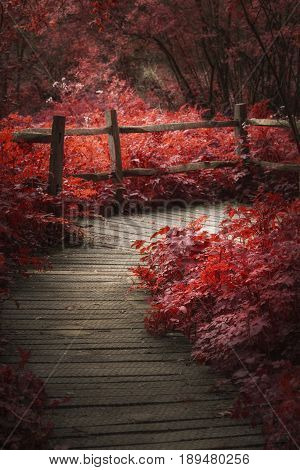 Beautiful Surreal Red Landscape Image Of Wooden Boardwalk Throughforest In Spring