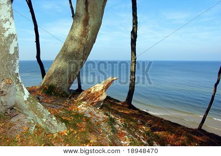 Forest coast
