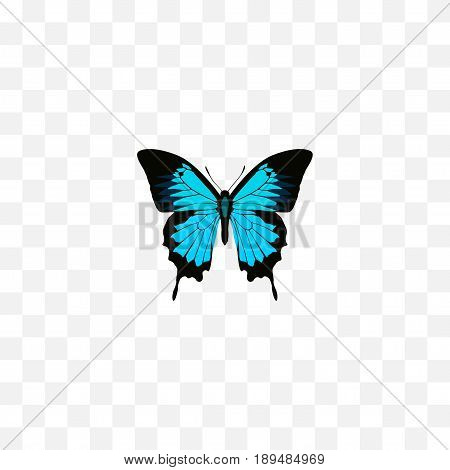 Realistic Sky Animal Element. Vector Illustration Of Realistic Papilio Ulysses Isolated On Clean Background. Can Be Used As Butterfly, Bluewing And Blue Symbols.