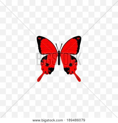 Realistic Archippus Element. Vector Illustration Of Realistic Sangaris Isolated On Clean Background. Can Be Used As Red, Julia And Butterfly Symbols.