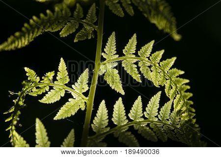 Detail of fern leaves under the sun light