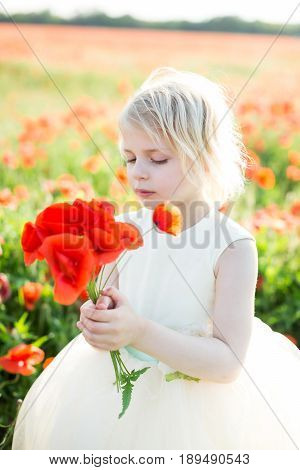little girl, summer, childhood, childcare, fashion concept - small cute faire-haired princess with bouquet of poppies in white beautiful dress with tulle skirt in the field of flowers