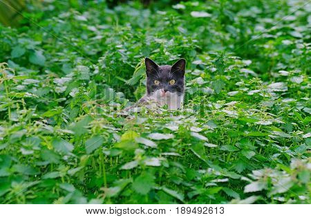 A stray cat sits in a dense green plant and looks at the camera.