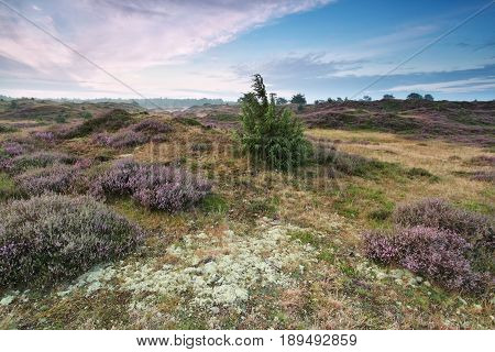 calm morning on heathland in Drenthe Netherlands