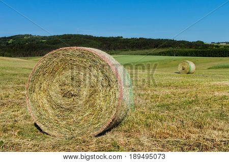 Hay bales on the meadow. Harvesting dried hay. Pushed meadow
