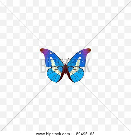 Realistic Morpho Aega Element. Vector Illustration Of Realistic Bluewing Isolated On Clean Background. Can Be Used As Bluewing, Morpho And Blue Symbols.