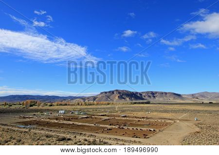 Huge cow farm, Chubut valley, Patagonia Argentina