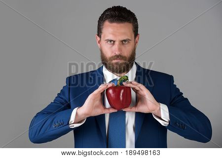 pepper in hand of man with beard or businessman holding red fresh vegetable in blue formal outfit with serious confident face on grey background healthy food and dieting