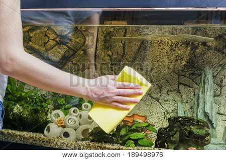 Young woman cleaning aquarium with microfibre at home.