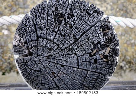 Wood circle texture slice. Close-up of old tree with nature background.