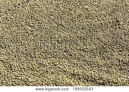 raw green mung beans bakground in asia