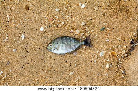one sea fish dead on the beach