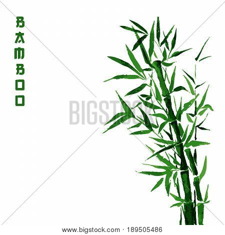 Bamboo green tree japanese plant or tree. Traditional sumi painting vector illustration for wallpaper or healthy therapy cosmetic products design