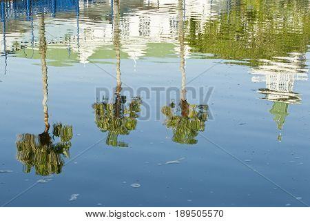 palm trees and building reflection in a large body of water in bright sunlight