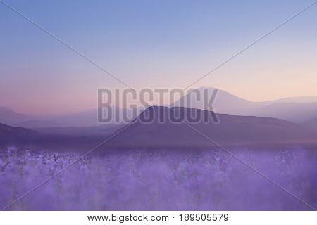 Lavender field at violet Sunset. Ridge Mountains. Skyline. Sky gradient. Nature landscape background.