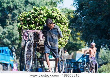 SILIGURI INDIA - DECEMBER 5 2016: local pulling a three-wheeled card laden with banana from the wholesale market