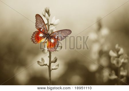 A red butterfly in the moody sepia flowers field. poster