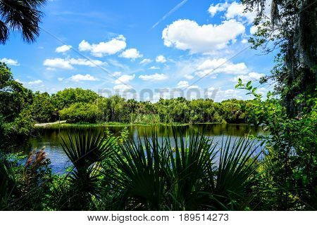 The overgrown banks of the Myakka River in southwest Florida almost make it look like a jungle setting.