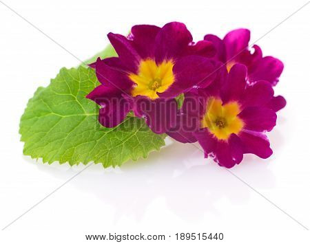 Pink flowers isolated on a white background