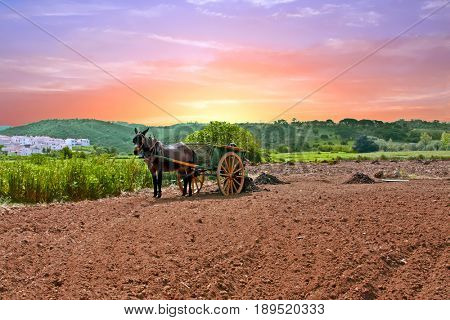 Horse cart with horse and a load of grass in the countryside from Portugal at sunset