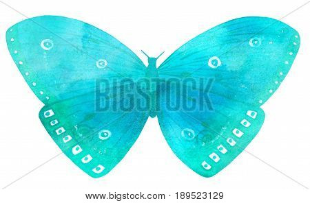 A watercolour drawing of a large vibrant turquoise butterfly, hand painted on white background in the style of vintage botanical art