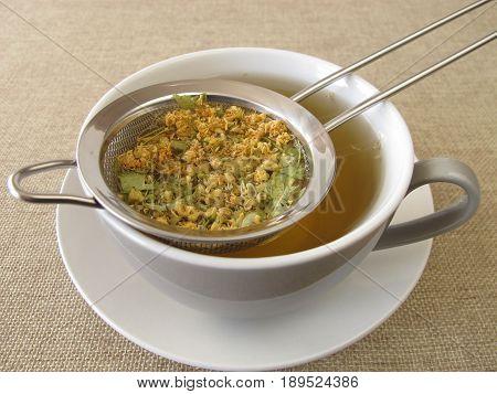Loose tilia flowers tea in tea strainer