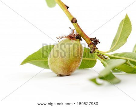 Peach. Fruit With Slice Isolated On White Background