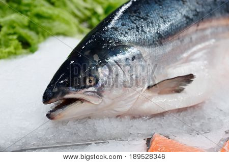 King salmon on ice in supermarket, close-up of head