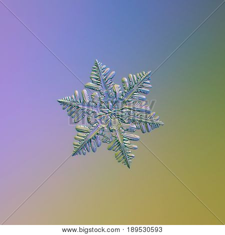 Stellar dendrite snowflake sparkle on smooth gradient background. This is macro photo of real snow crystal with glossy relief surface, fine symmetry and complex structure with lots of side branches.