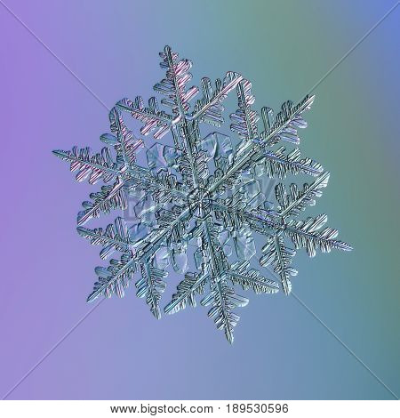 Large snowflake glittering on bright gradient background. This is macro photo of real snow crystal: big stellar dendrite with complex structure, fine symmetry and elegant, thin arms with side branches