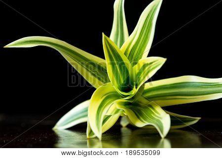 Vivid Tropical Plant