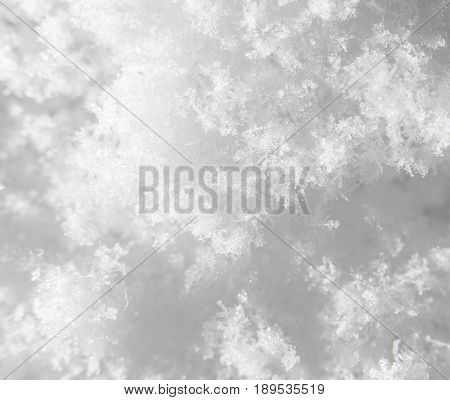 snow as a background. close-up . A photo