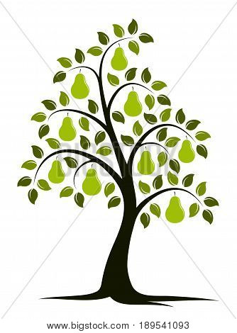 vector pear tree isolated on white background