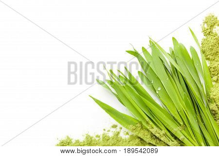 Young barley grass with copyspace isolated on white background from above. Detox and superfood.