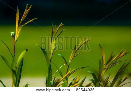 Fresh saplings on blurred green and dark blue background on a sunny day