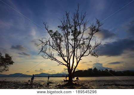 tree in the sea with beautiful sunset background