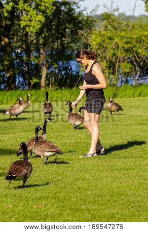 Young woman feeding wild Canada geese by a lake in Wisconsin during the springtime