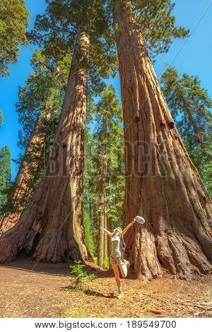 Summer travel freedom woman in Sequoia National Park with arms raised up cheerful and happy. Woman posing for a picture at the base of large sequoia trees. Summer traveler concept. California, USA.